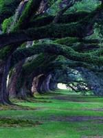 Trees: Magic of Life
