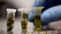 Herb testing