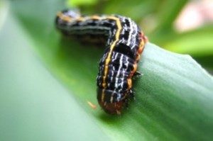 caterpillar-on-leaf